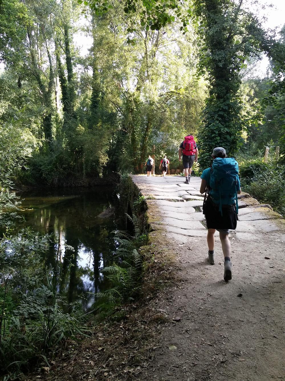Walking through the Gallego forests with our little group