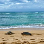 Honu friends on the beach.