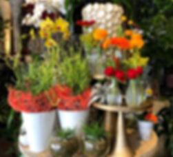 indoor plants, plant, sacramento plants, sacramento, florist, floral design, succulents, airplants, orchids, firesticks, phalaenopsis, dracena, rubber tree, spaths, peace lilies, plant decor, decor,