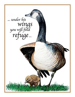 15. Goose with goosling (si).jpg