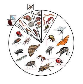 Pie Chart Breakdown of Animalia Finished