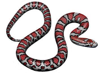 Milk Snake Finished Art (si).jpg