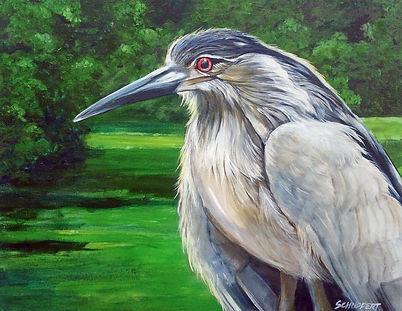 5. Black Crowned Night Heron.jpg