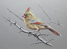 Cardinal-Female (si).jpg