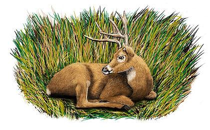 Deer with Bed.jpg