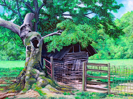 Old Oak Tree and Cotton Shed (si).jpg