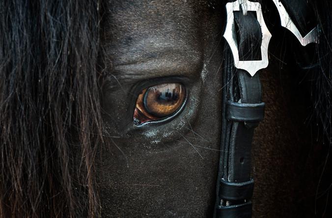 Dein Pferd