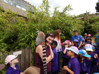 Year 2 Visit Colchester Zoo