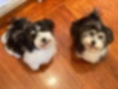 Bella and Cody.jpg