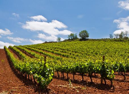¿Dónde nacen los exquisitos vinos de PYNOI?