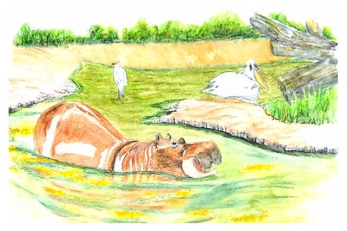 Hippo at Animal Kingdom