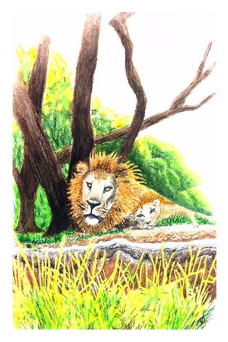 Lions at Animal Kingdom
