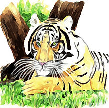 Tiger from safari 2.jpg