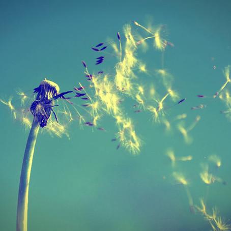 Que os Bons Ventos soprem na melhor direção