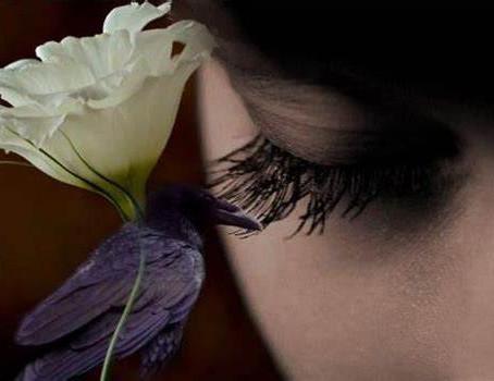 Silencia: fechar os olhos, sentir a melodia