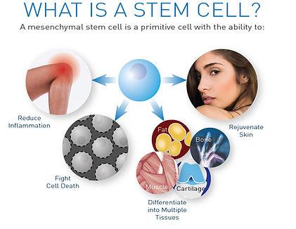 what-is-a-stem-cell-RGB-rejuvenate.jpg