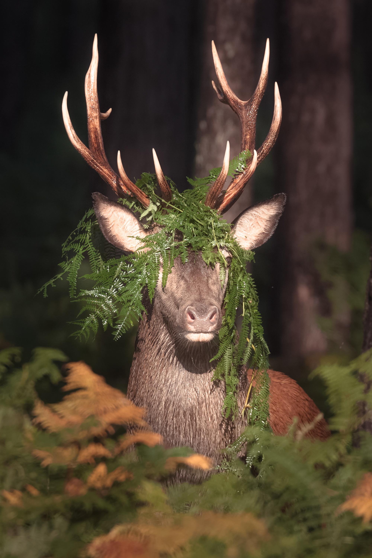 leçon de camouflage