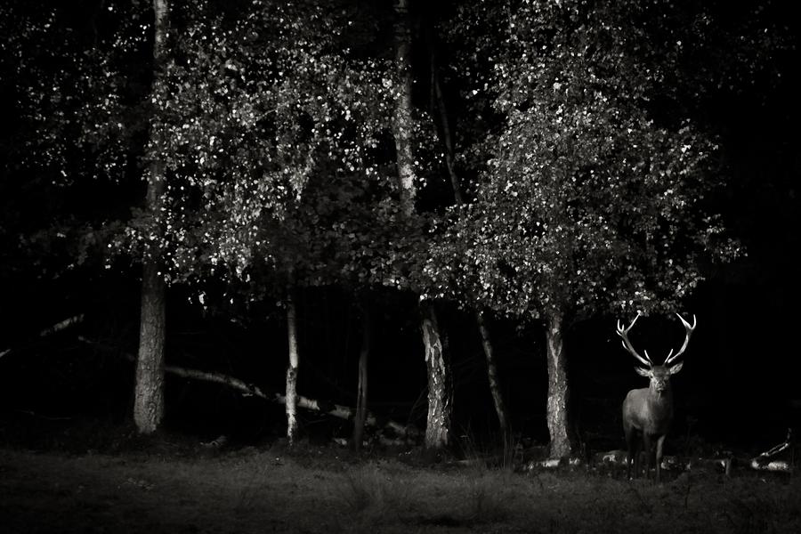 forêt de bois