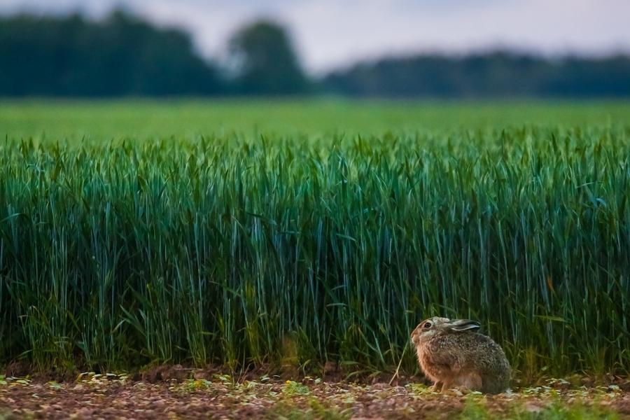 A l'orée des blés