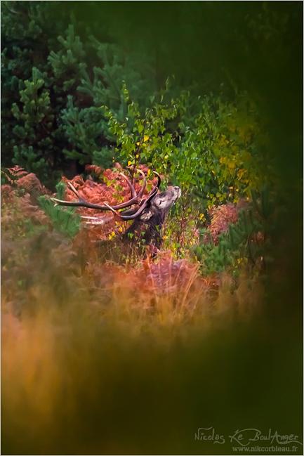 délices d'automne