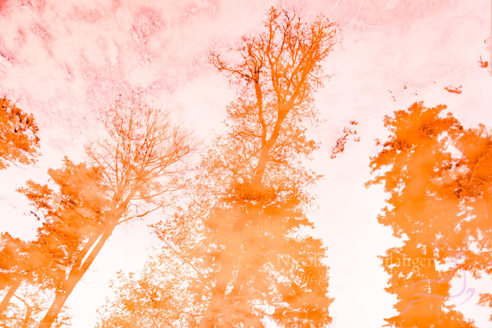 reflet grés rose
