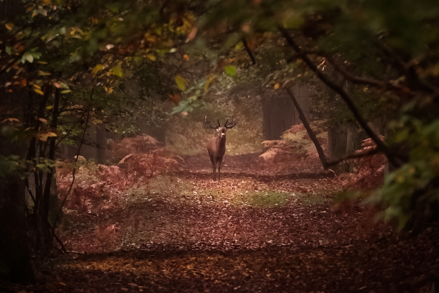 souffle d'automne