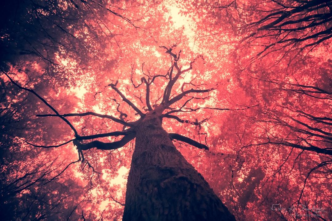 le poumon de la forêt