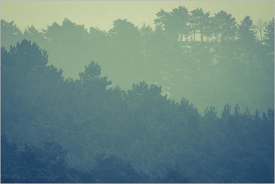 paysage de brumes