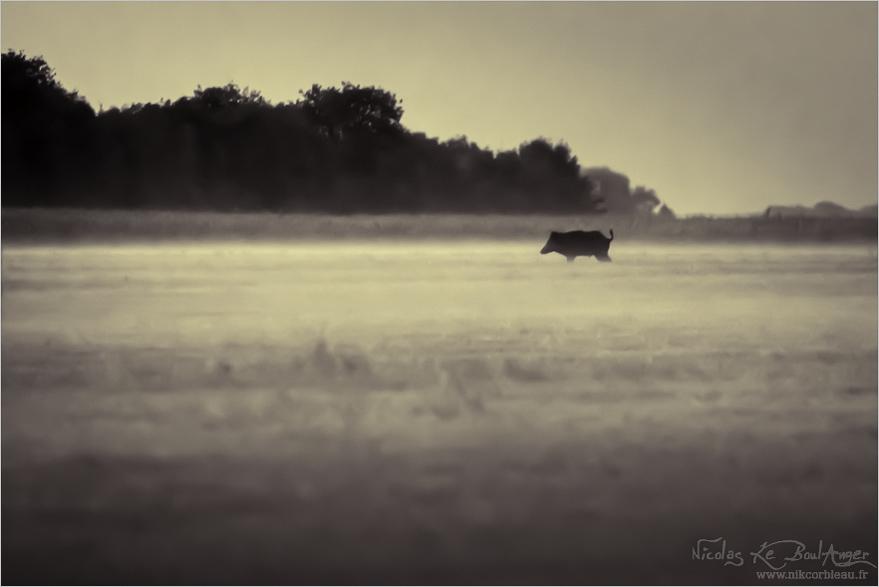 matin dans la brume
