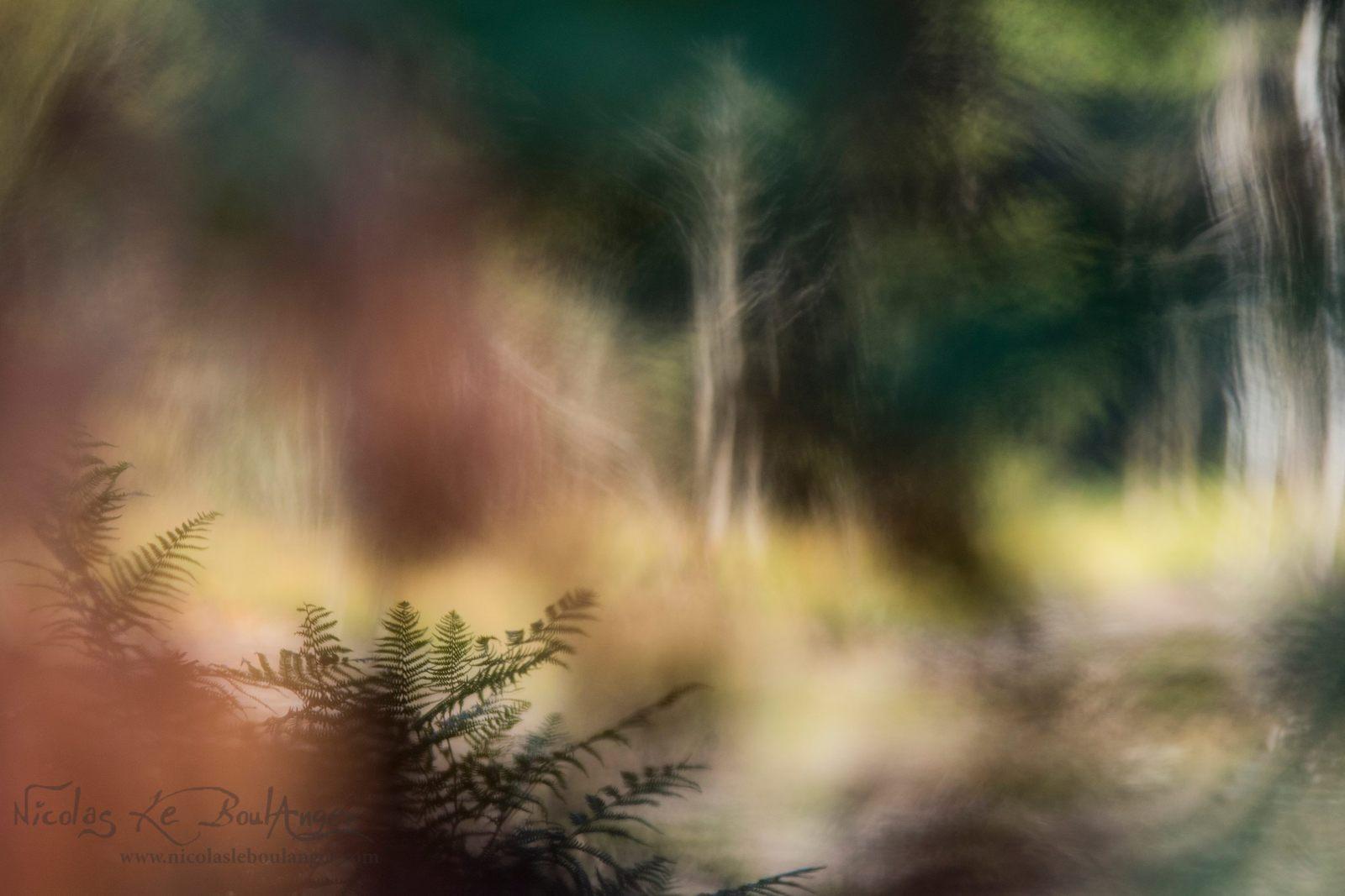 l'âme de la forêt