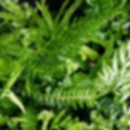 Plants Fuger_edited.jpg