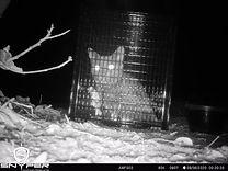 Cat in trap.jpg