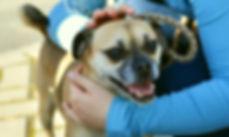 dog-3026154_1920.jpg