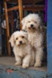 dog-3691491_1920.jpg