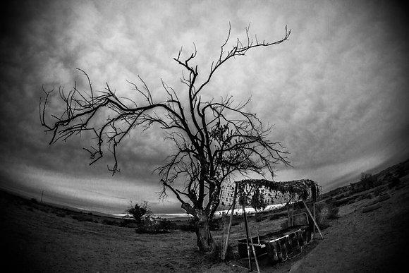 Lost Tree 8x10