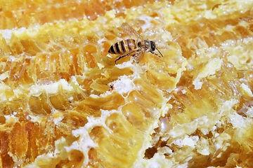 はちみつとハチ