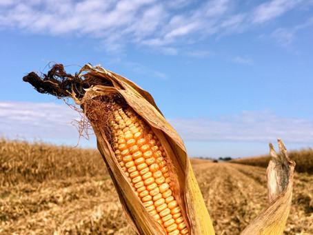 Mississippi Delta farm tour: Crops 101