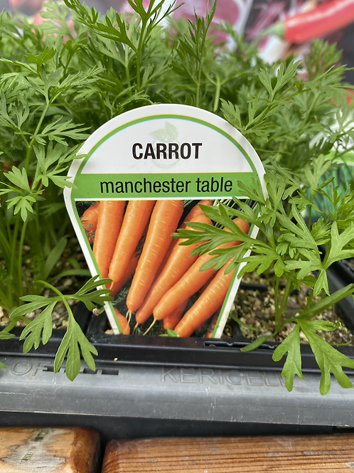 Carrot Manchester Table 6 cell K