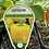 Thumbnail: Capsicum Yellow 9cm
