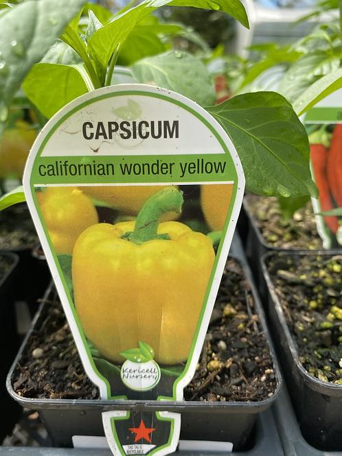 Capsicum Yellow 9cm