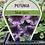 Thumbnail: Petunia Blue Lace 6 cell K