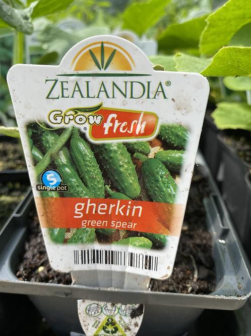 Gherkin Green Spear 10cm Z