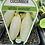 Thumbnail: Cucumber White Wonder 9cm