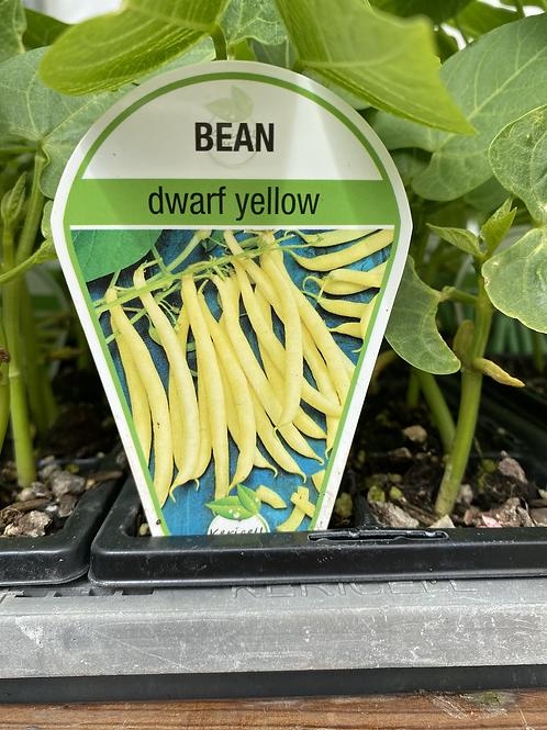 Bean Yellow Dwarf 6 cell K