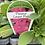 Thumbnail: Petunia Carpet Pink 6 cell K