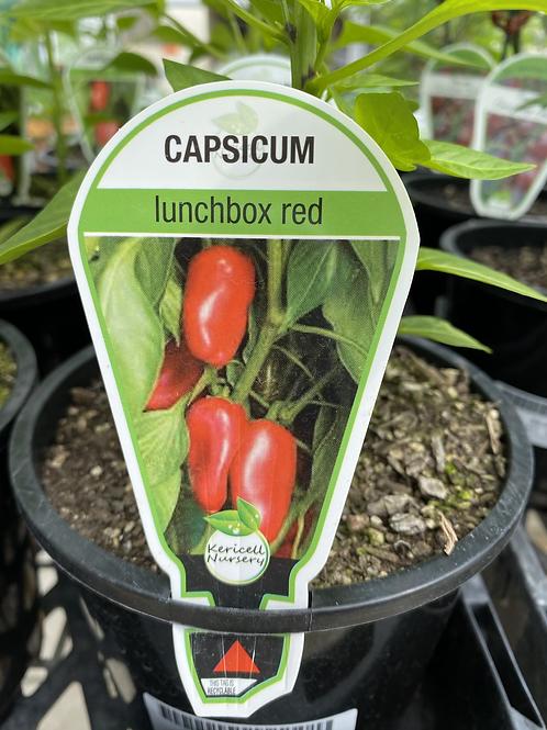 Capsicum Lunchbox Red 1.3L