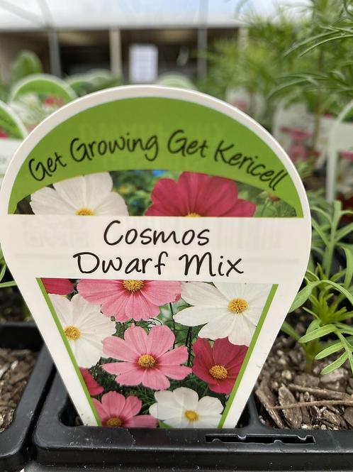 Cosmos Dwarf Mix 6 cell K