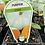 Thumbnail: Pumpkin Crown 9cm