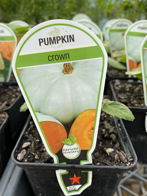 Pumpkin Crown 9cm
