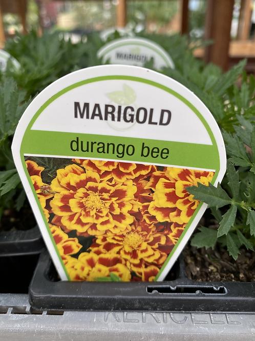 Marigold Durango Bee 6 cell K